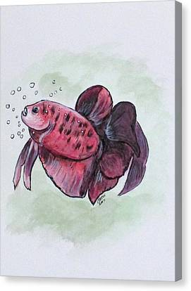 Bubbles, Betta Fish Canvas Print