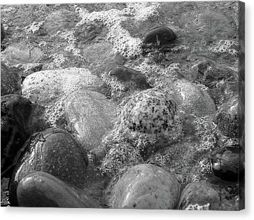 Bubbling Stones Canvas Print