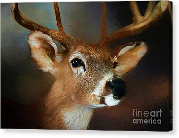 Canvas Print featuring the photograph Buck by Darren Fisher
