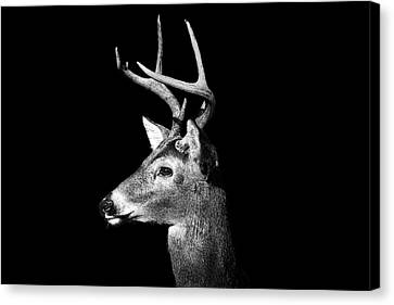 Animal Body Part Canvas Print - Buck In Black And White by Malcolm MacGregor