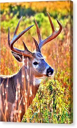 Buck Less Traveled Canvas Print by Emily Stauring
