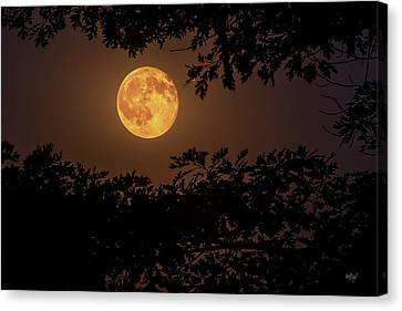 Buck Moon 2016 Canvas Print by Everet Regal
