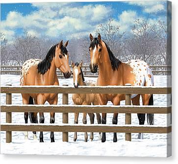 Buckskin Appaloosa Horses In Snow Canvas Print by Crista Forest