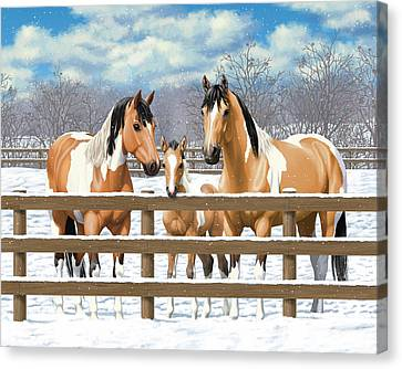 Buckskin Paint Horses In Snow Canvas Print by Crista Forest