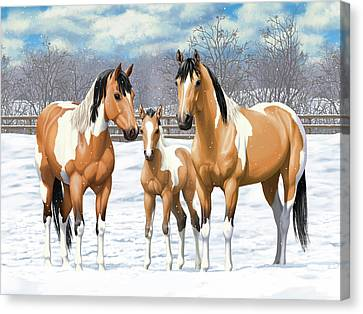 Buckskin Paint Horses In Winter Pasture Canvas Print by Crista Forest
