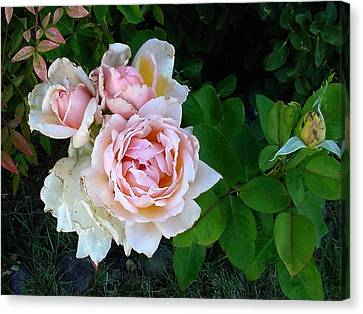 Bud And The Ladies Canvas Print by Fred Wilson