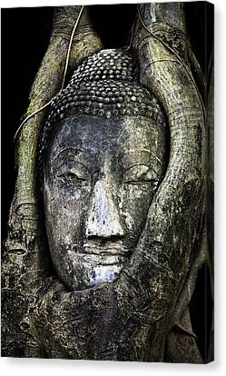 Ancient Art Canvas Print - Buddha Head In Banyan Tree by Adrian Evans