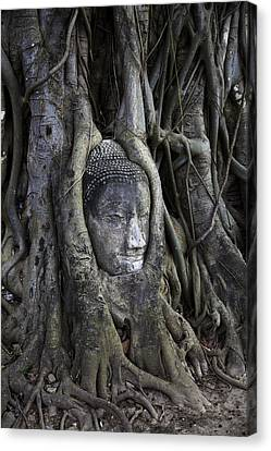 Buddha Head In Tree Canvas Print by Adrian Evans