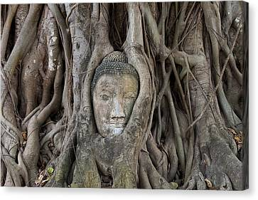 Buddha Head In Tree, Temple Wat Mahatat, Thailand Canvas Print by Peter Adams