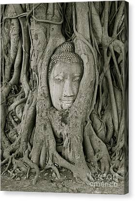 Buddha Tree   Canvas Print