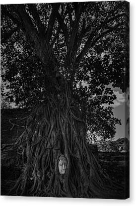 Buddha's Head Entwined In Banyan Tree Roots Canvas Print by Dylan Newstead