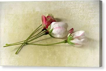 Budding Blossom Canvas Print by Jessica Jenney