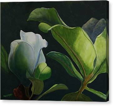 Budding Magnolia Canvas Print