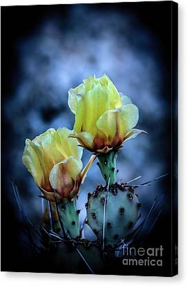 Canvas Print featuring the photograph Budding Prickly Pear Cactus by Robert Bales