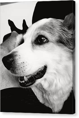 Canvas Print - Buddy by James