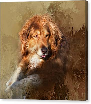 Canvas Print featuring the photograph Buddy by Theresa Tahara