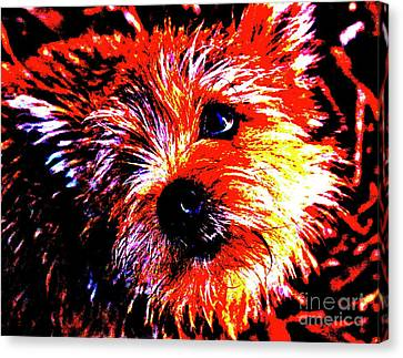 Buddy Canvas Print by Xn Tyler