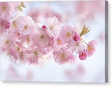 Buds And Blossom Canvas Print by Jacky Parker
