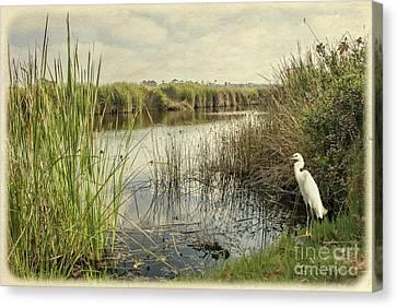 Buena Vista Lagoon-snowy Egret Canvas Print