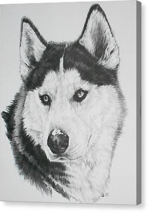 Working Dog Canvas Print - Buff by Barbara Keith
