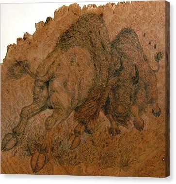 Buffalo Butt Canvas Print by Jerrywayne Anderson