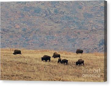 Bison Heard Canvas Print - Buffalo Grazing On The Prarie by Richard Smith
