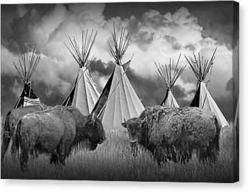 Buffalo Herd Among Teepees Of The Blackfoot Tribe Canvas Print