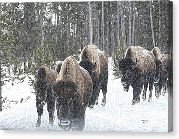 Buffalo Herd Emerges From The Snowy Yellowstone Mist Canvas Print