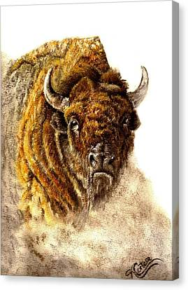 Buffalo Canvas Print by Karen Cortese