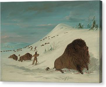 Buffalo Lancing In The Snow Drifts - Sioux American Canvas Print by Mountain Dreams