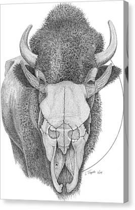 Buffalo Canvas Print by Lawrence Tripoli
