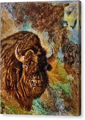Buffalo Canvas Print by Maris Sherwood