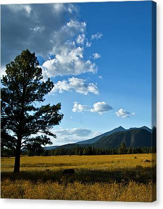 Canvas Print featuring the photograph Buffalo Park 3 by Tom Kelly