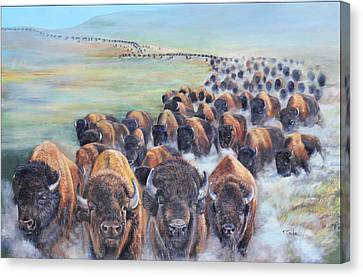 Buffalo Stampede Canvas Print
