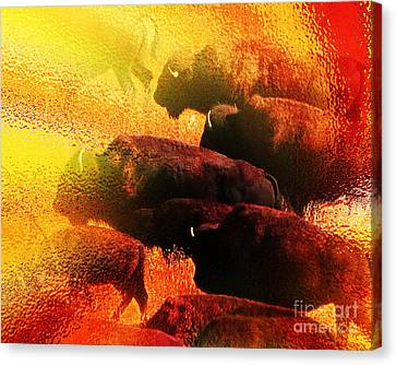 Buffalo Sun Canvas Print by Terril Heilman