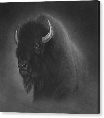 Buffalo Canvas Print by Tim Dangaran