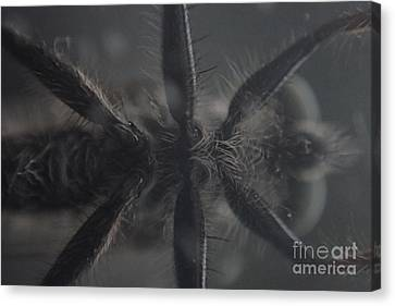 Goulish Canvas Print - Bug Belly by Christina Verdgeline