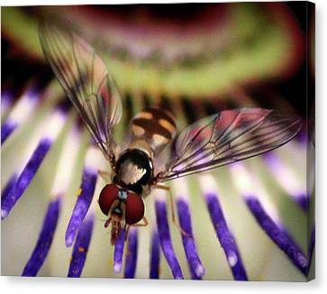 Bug Eyed Canvas Print by Martin Newman