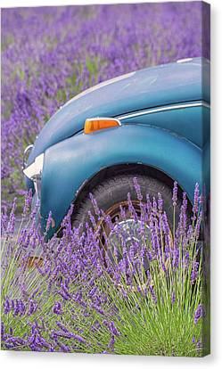 Canvas Print featuring the photograph Bug In Lavender Field by Patricia Davidson