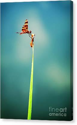Dragonfly Eyes Canvas Print - Bug Olympics Xvii by Charles Dobbs