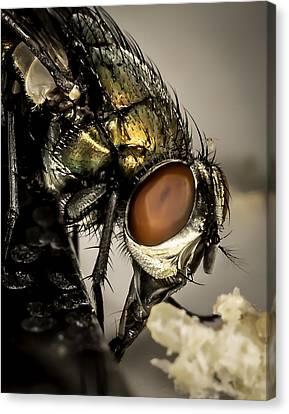 Bug On A Bug Canvas Print