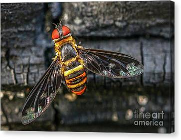 Bug With Red Eyes Canvas Print by Tom Claud