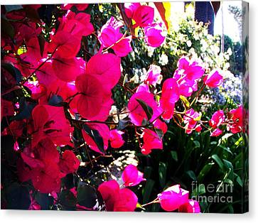 Canvas Print featuring the photograph Bugambilia by Vanessa Palomino