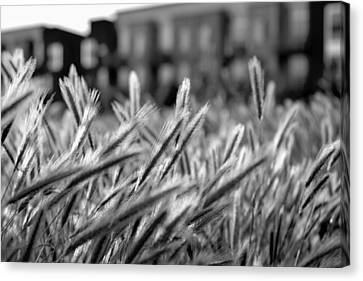 Buildings Are Growing Behind The Grass Canvas Print