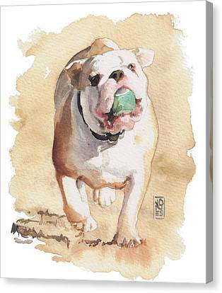 Bulldogs Canvas Print - Bull And Ball by Debra Jones