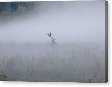 Bull Elk In Fog - September 30, 2016 Canvas Print