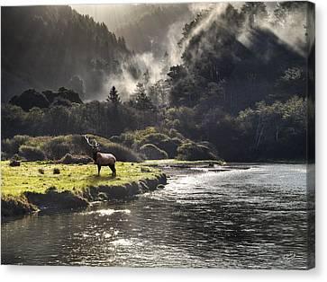 Bull Elk In Wilderness Canvas Print by Leland D Howard
