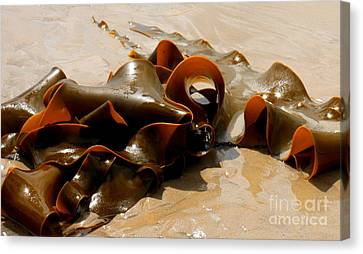 Bull Kelp Canvas Print