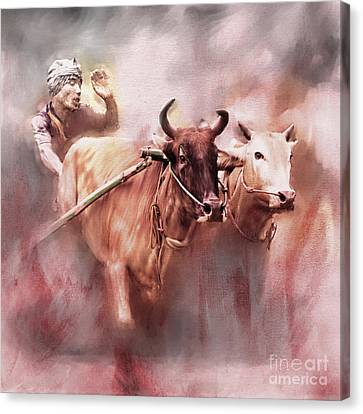 Bull Race 01 Canvas Print