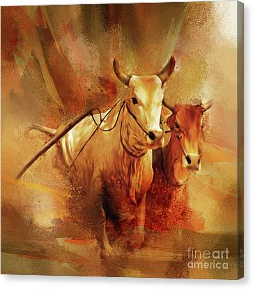 Bull Racing 081 Canvas Print